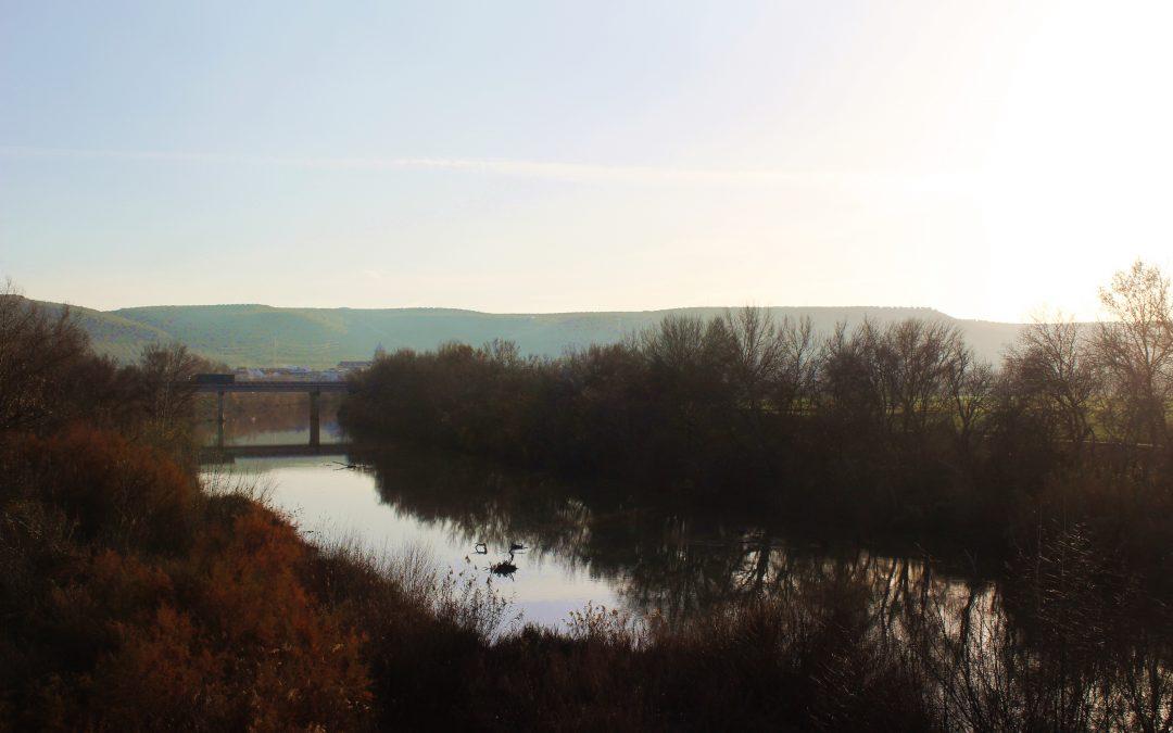 Confederación actuará en el entorno del Puente Romano y en el arroyo Cañetejo 1