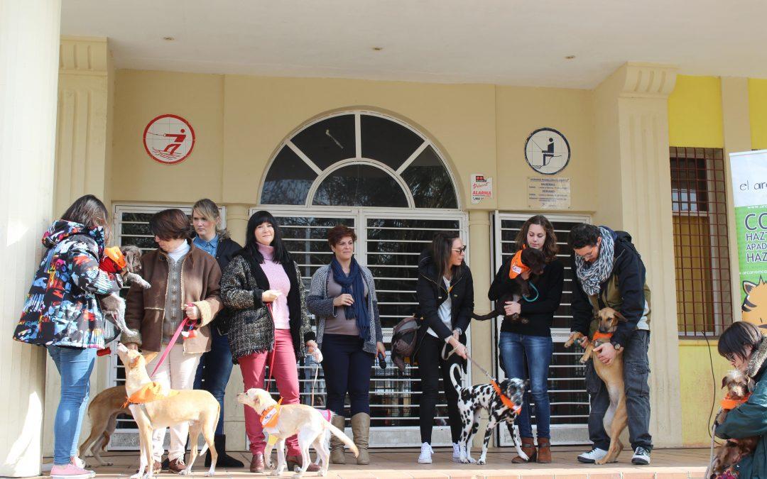 Un domingo de perros que buscan hogar 1