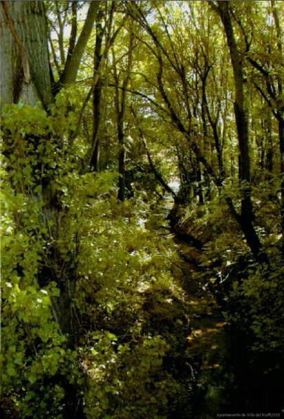 Estrato arbóreo