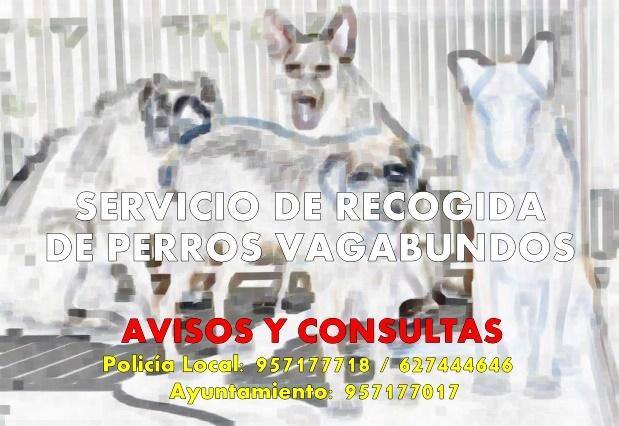 Servicio de Recogida de perros vagabundos