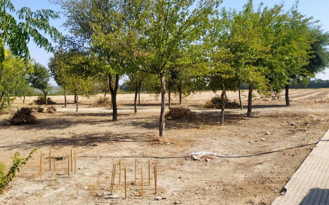 Finalizan las labores de adecentamiento y conservación de las zonas ajardinadas del polígono industrial La Vega 1