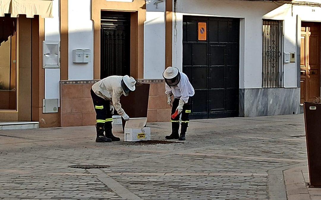 Efectivos de Bomberos y Policía Local retiran un enjambre 1